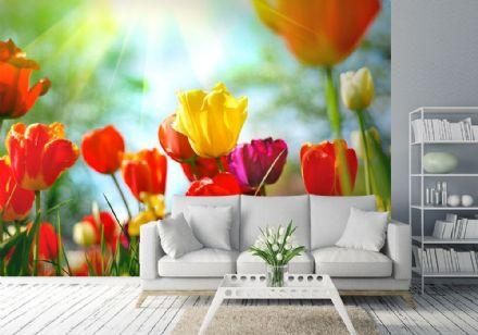 Colourful Tulips Floral summer wallpaper mural